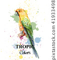 watercolor, parrot, tropical 41933498