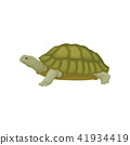 turtle, tortoise, animal 41934419