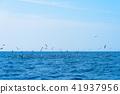 海景 海鳥 波浪 41937956