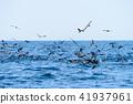 海景 海鳥 波浪 41937961