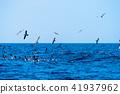 海景 海鳥 波浪 41937962