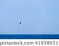 風景 海景 海鳥 41938031