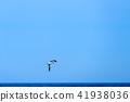 風景 海景 海鳥 41938036