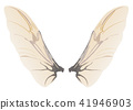 Wings of insect 41946903
