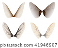 wings insect 41946907