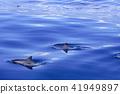 海豚 海洋 海 41949897