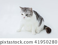 cat, pussy, fat cat 41950280
