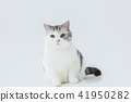 A little fat cat in the white background 41950282