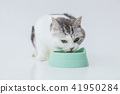 Eating food, cat during a meal 41950284