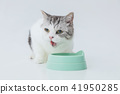 cat, pussy, be in the middle of eating meal 41950285