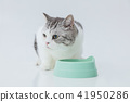 Eating food, cat during a meal 41950286