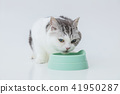 Eating food, cat during a meal 41950287