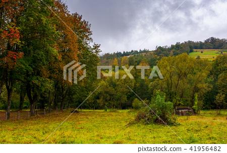 abandoned garden in autumn hazy weather 41956482
