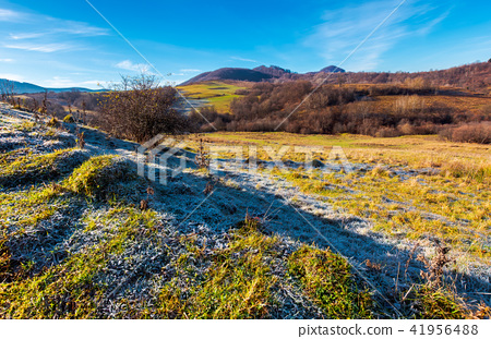 morning hoarfrost on the grassy meadow in mountain 41956488