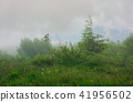 alpine meadow in fog and mist 41956502