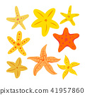 starfish vector collection design 41957860