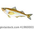 日本叉牙魚 水彩 水彩畫 41960003