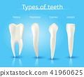 type, teeth, tooth 41960625