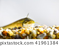 鯰魚 41961384
