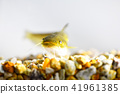 鯰魚 41961385