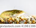 鯰魚 41961386