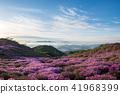 흰구름에 운해와 철쭉꽃 만발한 황매산 풍경 41968399