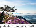 철쭉, 운해, 산 41968400