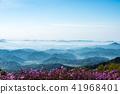 철쭉, 운해, 산 41968401
