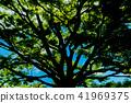 shadow, tree, green 41969375