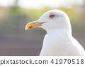 海鷗 鷗 鳥兒 41970518