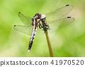 蜻蜓 蟲子 漏洞 41970520