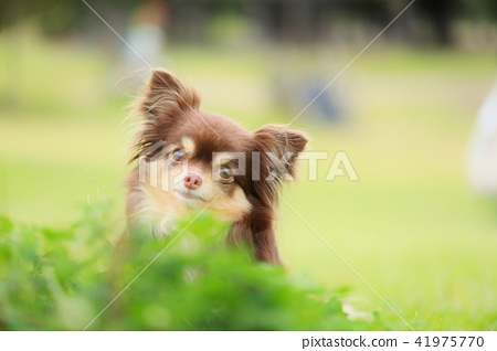 Dogs and Nature 41975770