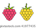 Red and yellow raspberries on white background. Logo design, vector illustration. 41977435