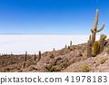 Salar de Uyuni view from Isla Incahuasi 41978183
