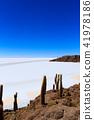 Salar de Uyuni view from Isla Incahuasi 41978186