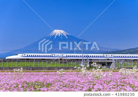 시즈오카 _ 후지산과 신칸센 41980230