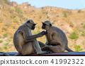 원숭이 41992322