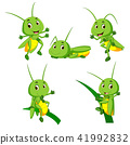 set collection grasshopper cartoon 41992832