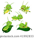 set collection grasshopper cartoon 41992833