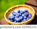 마당에서 키운 블루 베리 수확 42006141