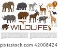 动物 野生 野生生物 42008424
