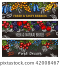 Vector sketch banners of farm and forest berries 42008467