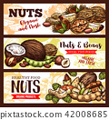 Vector sketch banners of nuts and beans 42008685