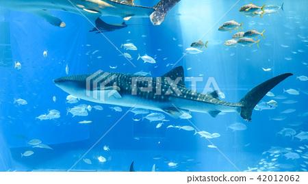 Aquarium whale shark 42012062