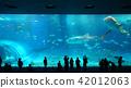 鯨鯊 水族館 鯊魚 42012063