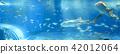 鯨鯊 水族館 鯊魚 42012064