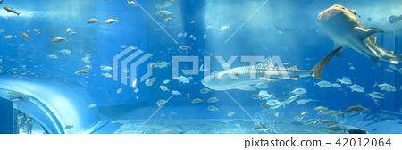 水族館鯨鯊 42012064