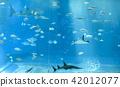 水族館 鯊魚 度假 42012077