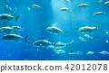 水族館 度假 放假 42012078
