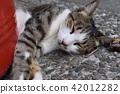 貓 42012282
